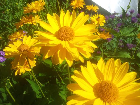 Gyllene blommor