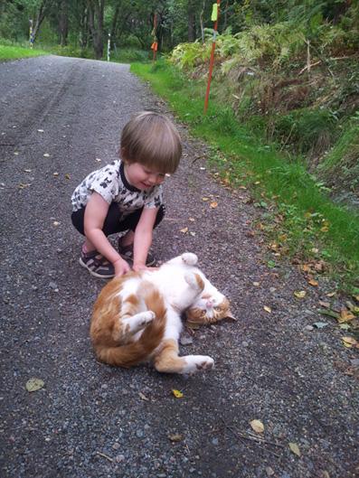 Lillan+katt