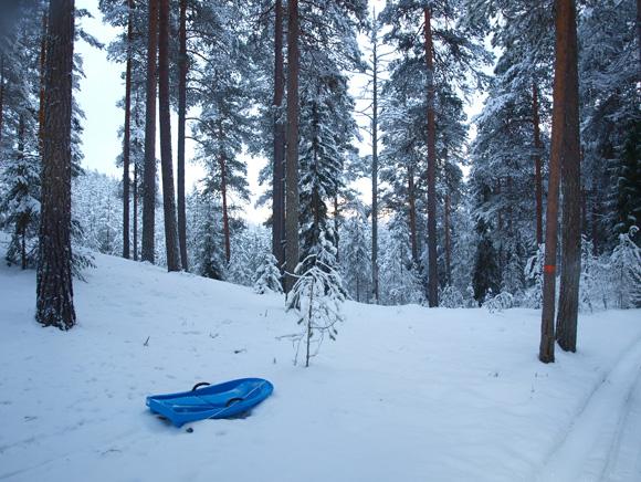 Pulka i skogen