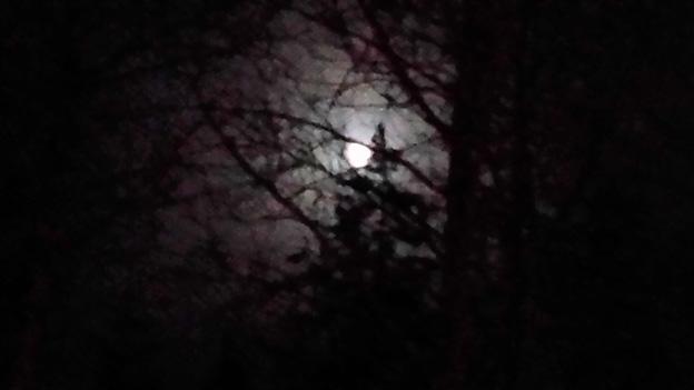 Fullmåne mellan träden