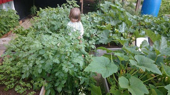 Lillan bland odlingarna